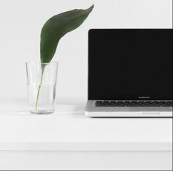 Online Body Image Therapy Michigan Plant next to laptop